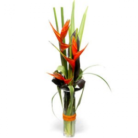 Heliconia tropical